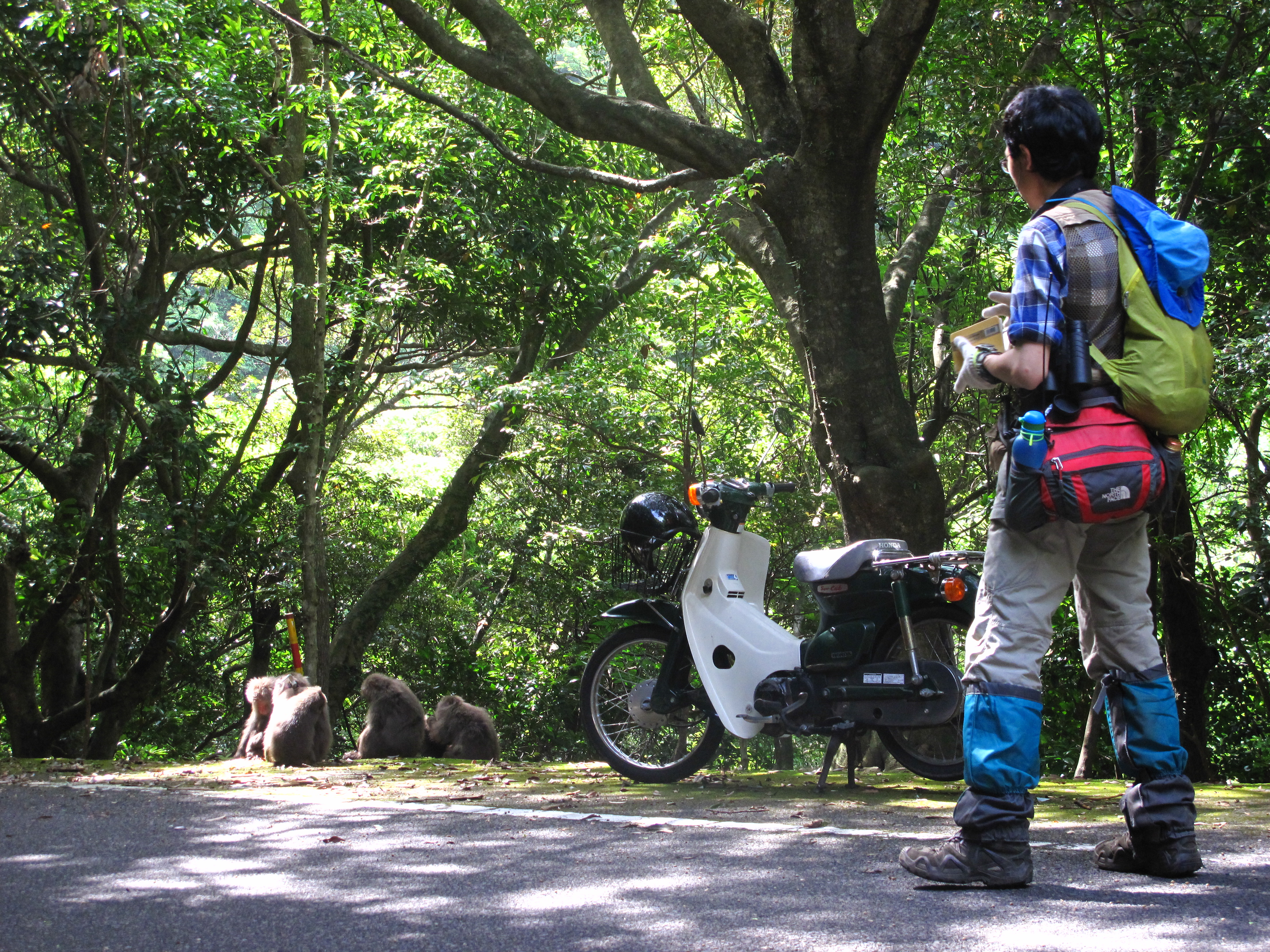 Working with macaques in Yakushima, Japan