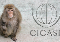 Center for International Collaboration and Advanced Studies in Primatology