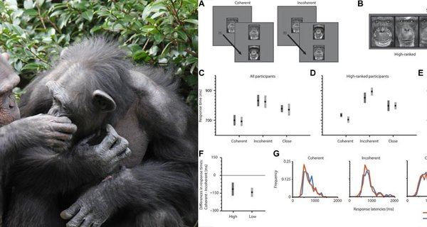 Chimpanzees use metaphor