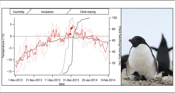 Antarctic Penguins Stymied by Extreme Climate Events