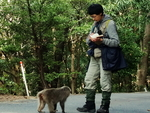 Working with macaques in Yakushima.