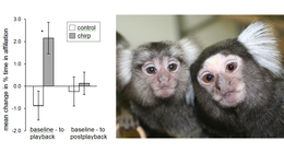 a new study on marmoset behavior
